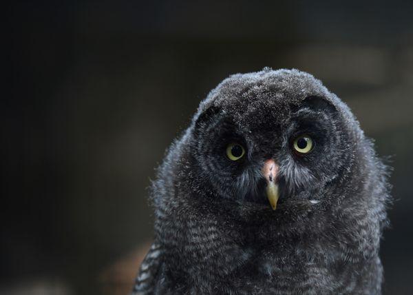 "Orange County's Audubon Starr Ranch Sanctuary's popular <a href=""http://starrranch.org/blog/"" target=""_blank"">Barn Owl cam</a"