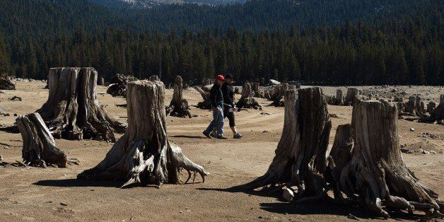 People walk amongst exposed tree stumps on the dried up lake bed of Huntington Lake which is at only 30 percent capacity as a