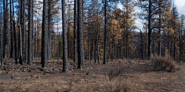 WEED, CA - SEPTEMBER 27:  Evidence of a forest fire near Weed is viewed along Highway 97 on September 27, 2014, in Weed, Cali