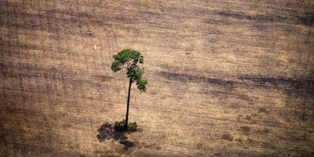 View of a tree in a deforested area in the middle of the Amazon jungle during an overflight by Greenpeace activists over area