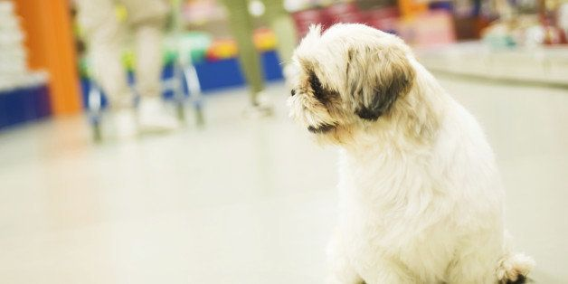 big sale 54c92 5a57a 19 Dog-Friendly Stores Where You Can Shop With Your Pup