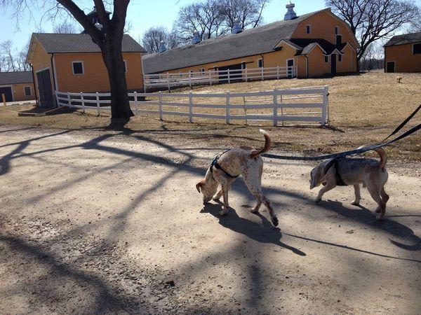 Casper and Linus walk in the sun.