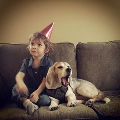 Casper the beagle gets ready for his first birthday post-rescue.
