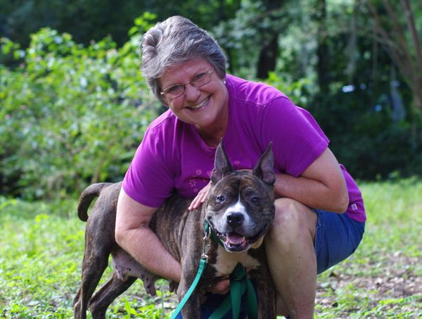 Arabelle spent the first decade of life having puppies born into dog fighting. Now she's been adopted by Sharon Nataline, a b