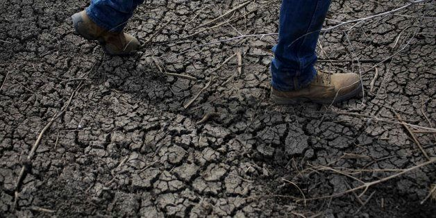 FILE - In this May 1, 2014 file photo, fourth-generation rice farmer Josh Sheppard walks across the dried-up ditch at his ric