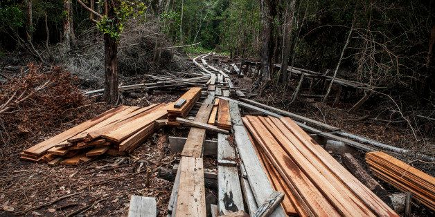 PEKANBARU, SUMATRA, INDONESIA - JULY 12: A view of timbers and logging railroad is used for transport logs from tropical rainforest made by illegal loggers at Kerumutan protected tropical rainforest, which is the Sumatran tiger habitat in Pelalawan district on July 12, 2014 in Riau province, Sumatra, Indonesia. The Nature Climate Change journal has reported that Indonesia lost 840,000 hectares of natural forest in 2012 compared to 460,000 hectares in Brazil despite their forest being a quarter of the size of the Amazon rainforest. According to Greenpeace, the destruction of forests is driven by the expansion of palm oil and pulp & paper has increased the greenhouse gas emissions, pushing animals such as sumatran tigers to the brink of extinction, and local communities to lose their source of life. (Photo by Ulet Ifansasti/Getty Images)