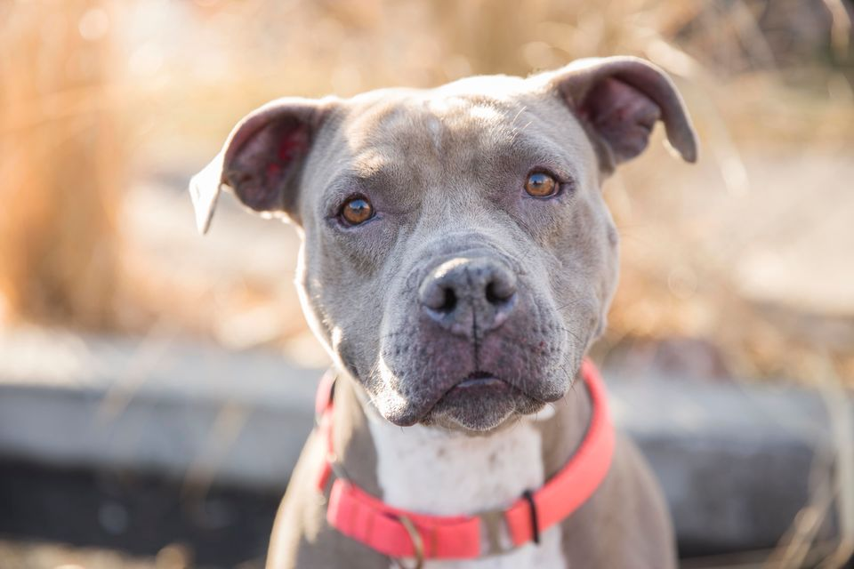 Buffy will win you over in an instant. This 5-year-old lady loves to play, loves to cuddle, likes some other dogs and loves t