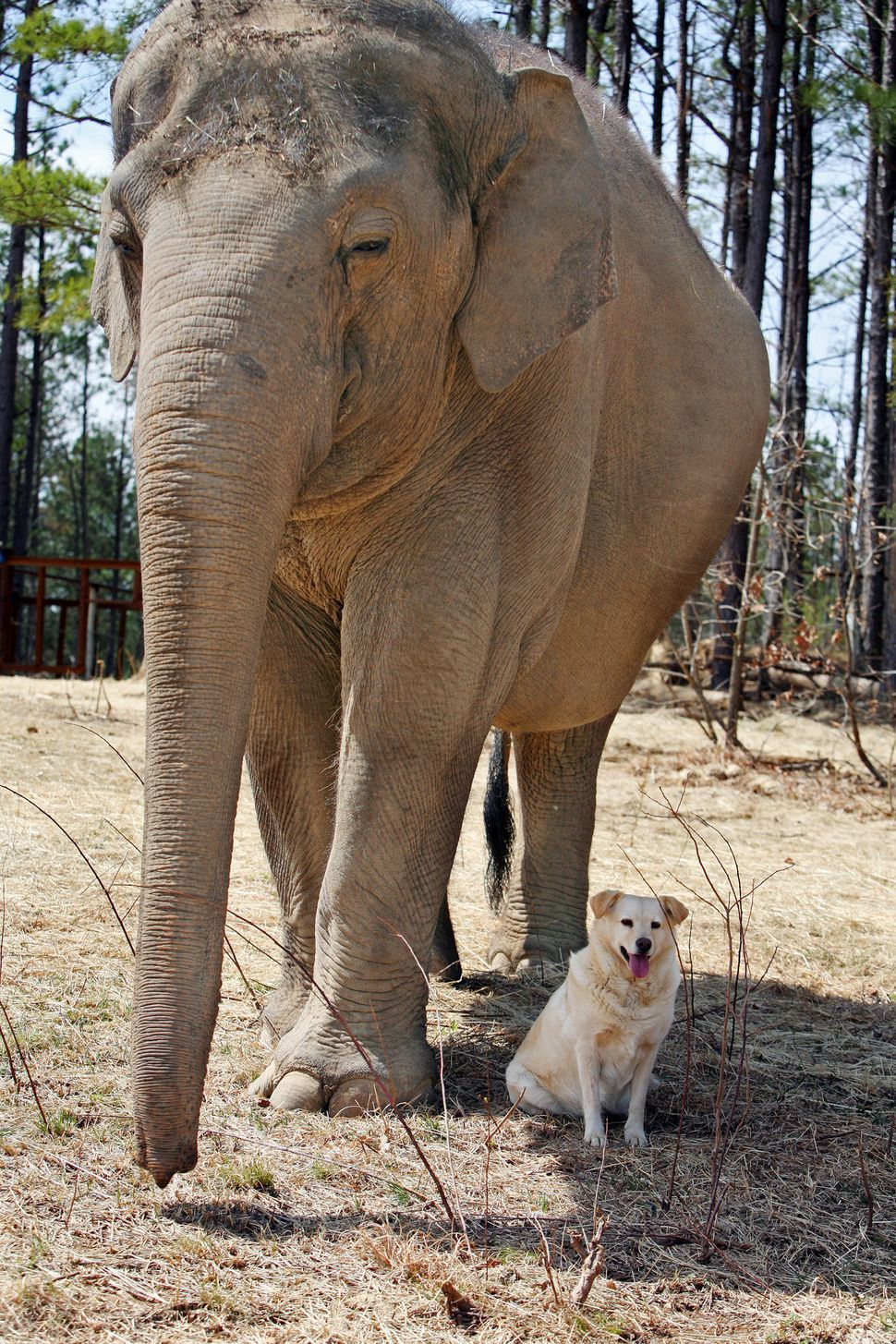 Bella, a stray dog, is best friends with Tarra, the elephant, at The Elephant Sanctuary in Hohenwald, Tennessee, on March 30,