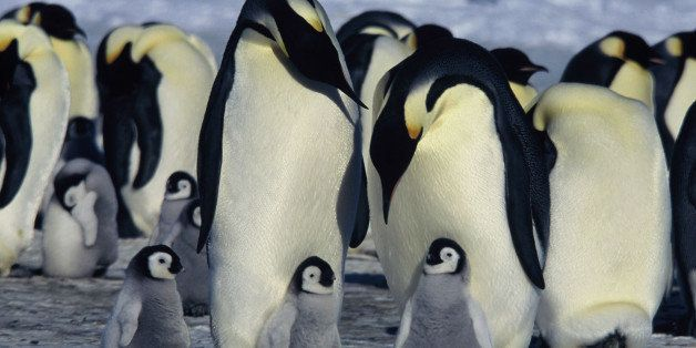 ON THE HARSHEST PLACE ON EARTH, LOVE FINDS A WAY  March of the Penguins, the exquisite, tender, unforgettable 2006 Academy Aw
