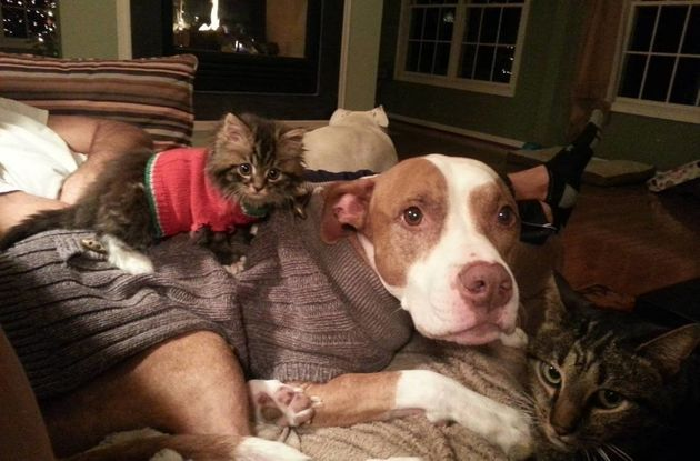 16 Reasons Why Fostering A Shelter Pet Is Basically The Best