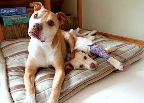 Shelters and rescue groups will typically cover medical costs for fosters. Sometimes, they'll foot the bill for food and othe