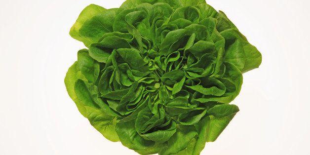 Lettuce, Close up