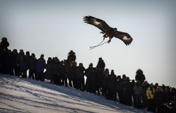 Spectators watch as an eagle that was released by a Chinese Kazakh eagle hunter flies above the crowd during a local competit
