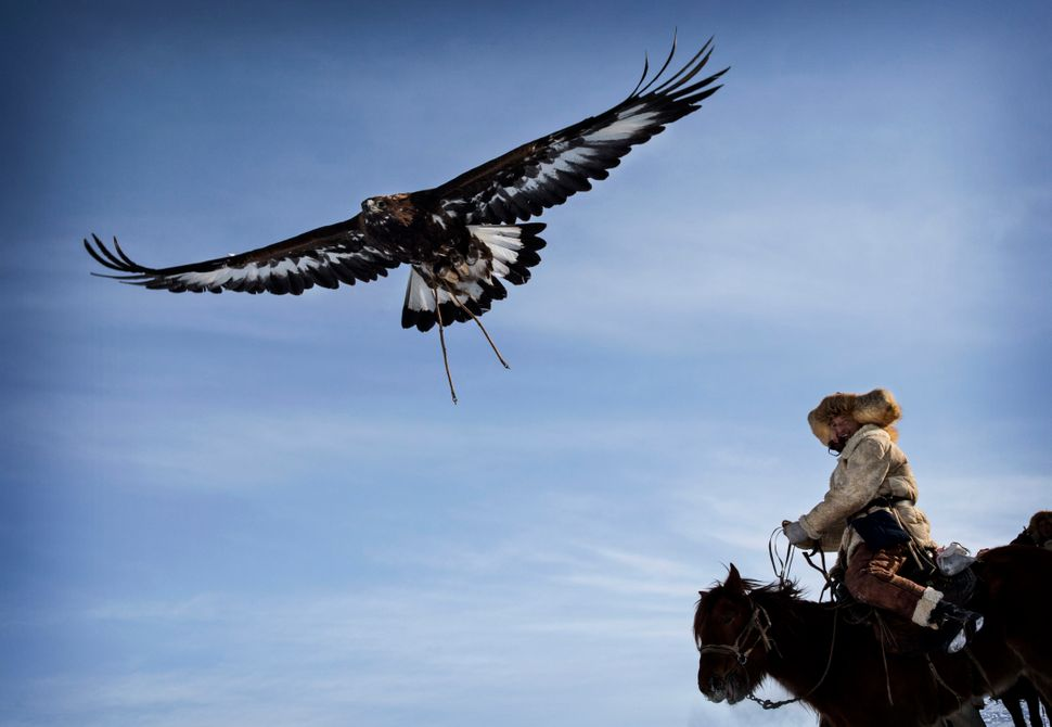 A Chinese Kazakh eagle hunter releases his eagle during a local competition in the mountains of Qinghe County, China, on Jan.