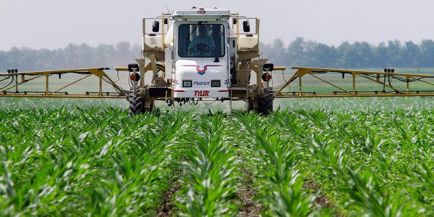 In this June 1, 2010 photo, central Illinois corn farmer Jerry McCulley sprays the weed killer glyphosate across his cornfiel