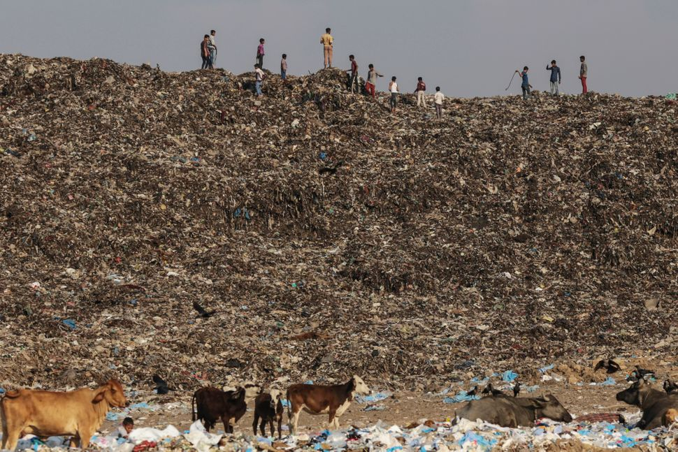 Boys play as cows graze through garbage at the Deonar landfill site in Mumbai, India, on Wednesday, March 11, 2015. Mumbai is
