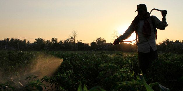 A Cambodian farmer sprays pesticide in his farm at sunset on the northern outskirts of Phnom Penh, Cambodia, Thursday, Jan. 5