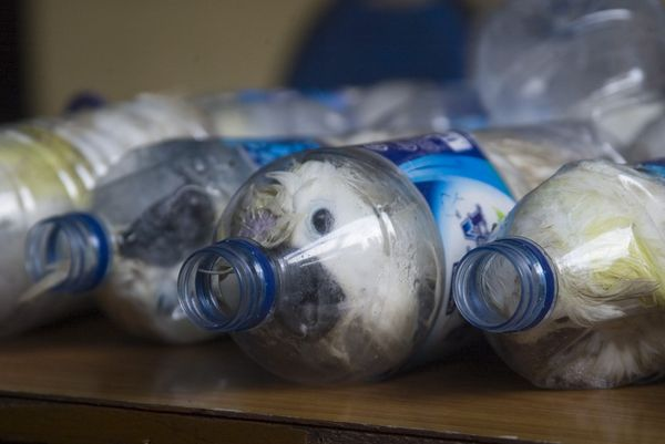 Cacatua sulphurea that were successfully secured from illegal wildlife trading are seen in empty bottles in Surabaya, East Ja