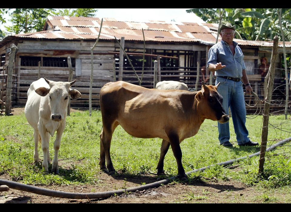 A full-sized cow is rather intimidating, don't you think? How about a mini cow for the family instead?   The one pictured b