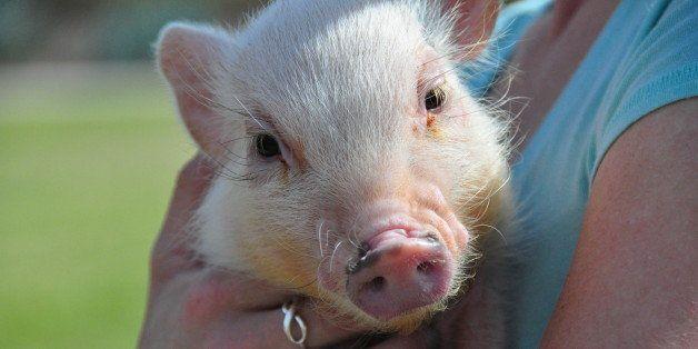 Piggy Meetup @ Discovery Park in Gilbert, AZ on February 21st,