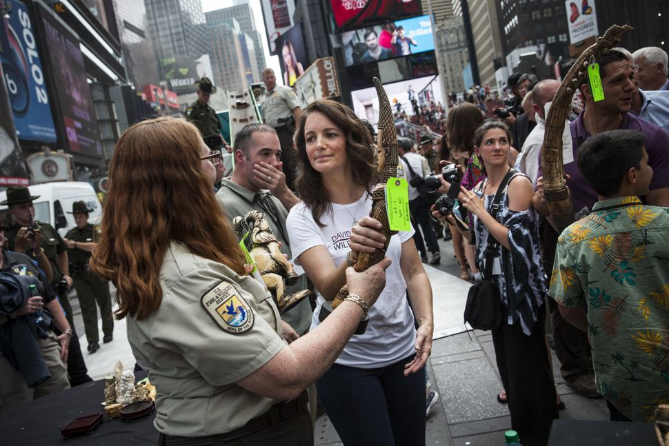 Actress Kristin Davis helps officials from the U.S. Fish and Wildlife Service destroy ivory trinkets confiscated by law enfor