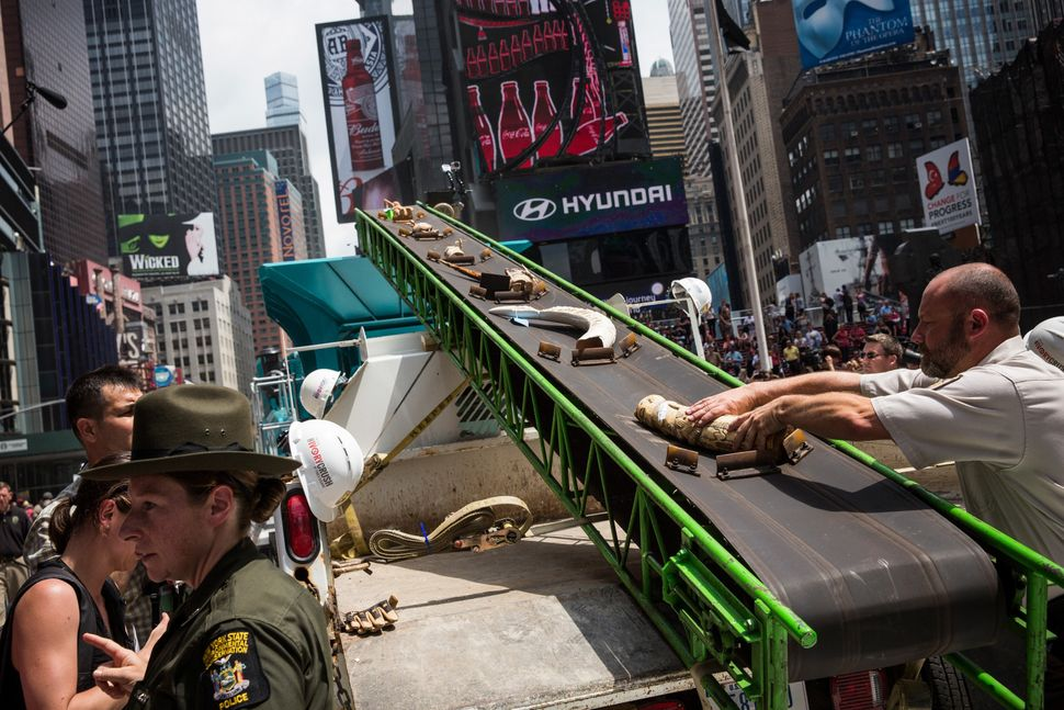 Officials from the U.S. Fish and Wildlife Service destroy ivory trinkets confiscated by law enforcement in Times Square on Ju