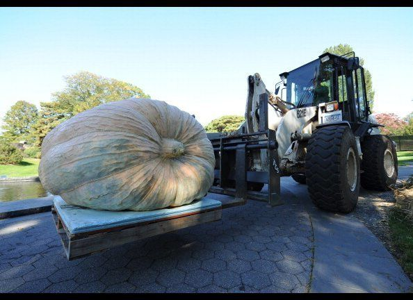 A pumpkin weighing 1,810.5 pounds (821.2 kg) being billed as the new world record holder and grown by Chris Stevens of New Ri