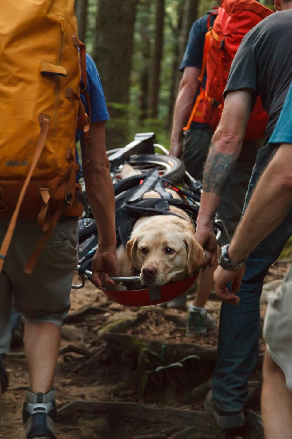 """Fraser, a 120-pound lab, and his owner went for a hike on a popular B.C. trail on a hot day in July 2015. But <a href=""""http:/"""