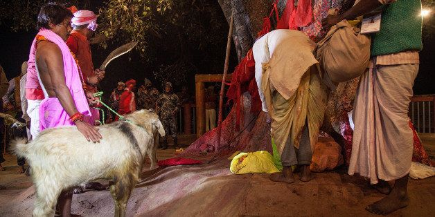 BARIYARPUR, NEPAL - NOVEMBER 28:  A group of devotees carry a goat to the main ritual area in the temple before the beginning