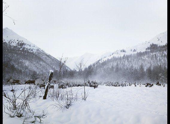 Nikolayev Matvey gathering reindeers, Verkhoyansk Range, Siberia, Russia, November 2007. Photo by Subhankar Banerjee.