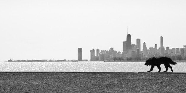 Dog walks along Montrose Harbor with Chicago skyline in background.