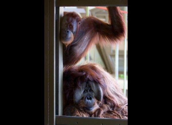 """""""Rocky"""" and """"Azy""""   Photo: Courtesy of Indianapolis Zoo"""