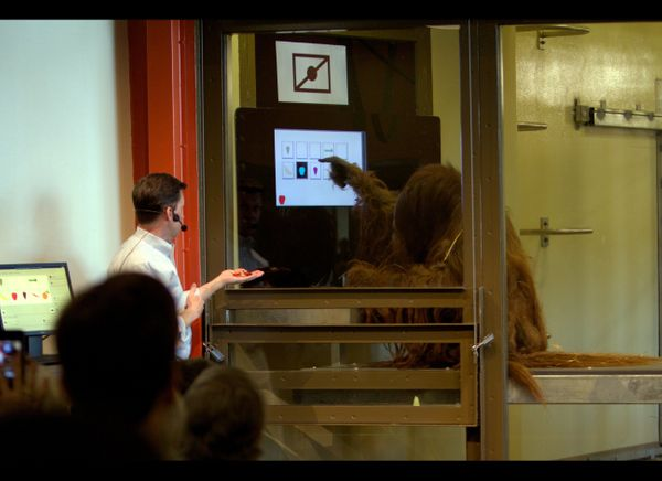 """Dr. Rob and """"Azy"""" working on a problem.  Photo: Courtesy of Indianapolis Zoo"""