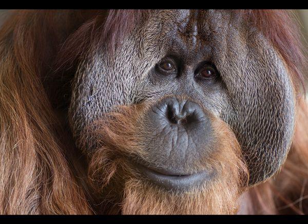 """""""Azy""""!  Photo: Courtesy of Indianapolis Zoo"""