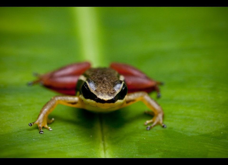NEW SPECIES - ANNOUNCED IN NOVEMBER 2010