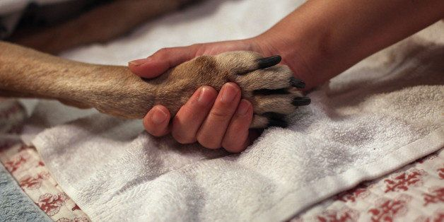 NEW YORK, NY - MAY 09:  Tomo McLoyd holds the paw of her dog Rocky, 14, as veterinarian Wendy McCulloch euthanizes the pet at