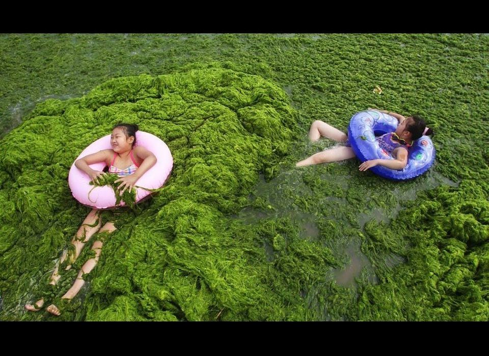 Children play in seawater covered by a thick layer of green algae at a beach in Qingdao, Shandong Province of China. A large
