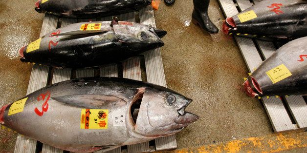In this Jan. 5, 2013 photo, a prospective buyer walks by tunas before the first auction of the year at the Tsukiji Market in