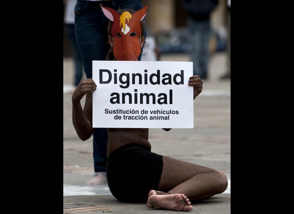 Activists of AnimaNaturalis Colombia take part in a demonstration against the use of animal traction vehicles at the Bolivar