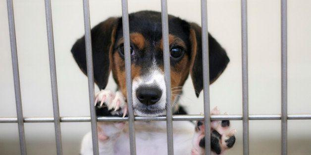 awaiting adoption