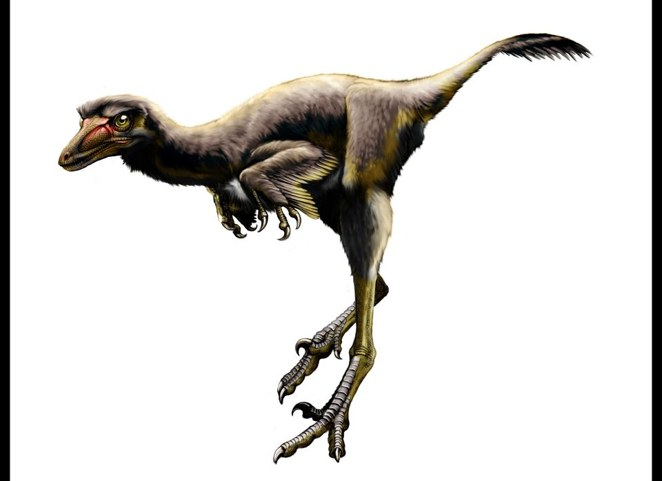 Fleshed-out reconstruction of Talos sampsoni, new troodontid dinosaur from the Upper Cretaceous Kaiparowits Formation, Grand