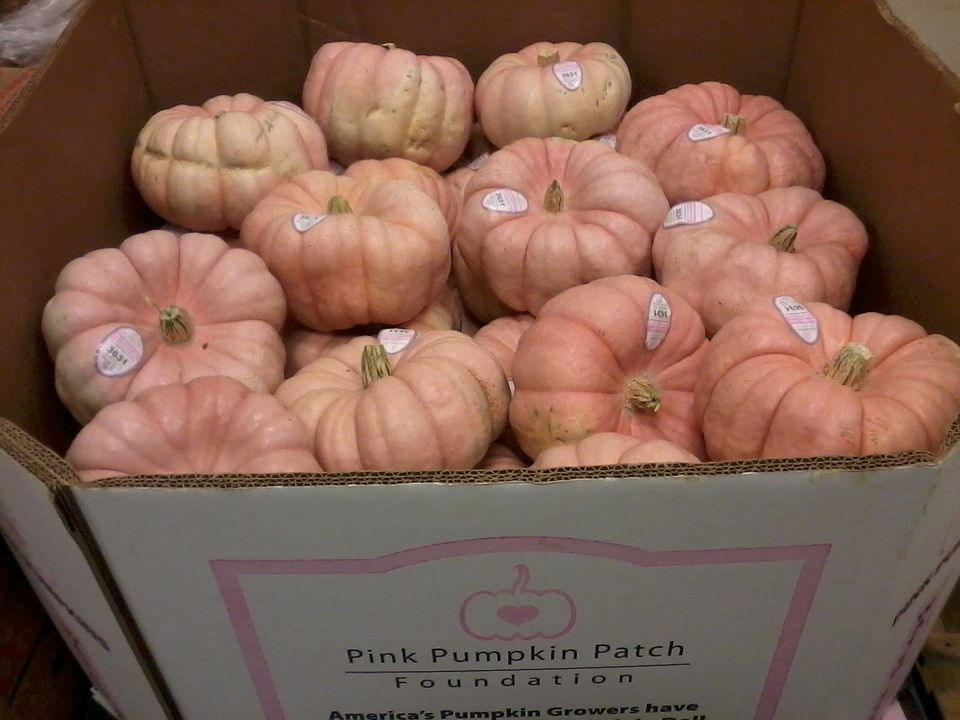 "<a href=""http://pinkpumpkinpatch.org/"">The Pink Pumpkin Patch Foundation</a> partners with local farmers to grow and sell pin"