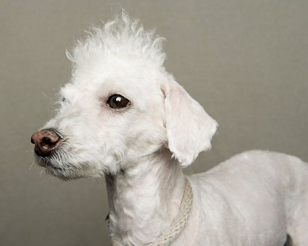 Back in 2009, LaNola Kathleen Stone, a New York-based photographer, took photos of 15 dogs in an East Harlem shelter who were