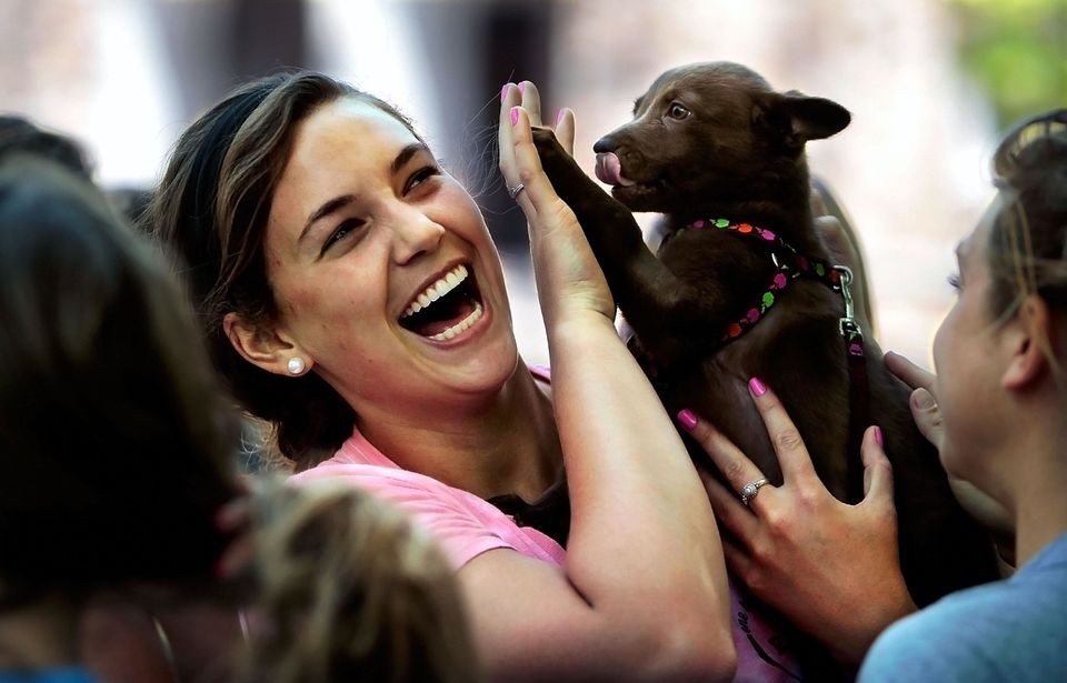 Animal shelters are almost always looking for extra help, and volunteering has never been so cute. While there might be some