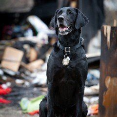 "<a href=""http://www.herodogawards.org/vote/?nominee=89247242"" target=""_blank"">Kai</a> is a fire detection dog with the San An"