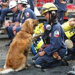 "<a href=""http://www.herodogawards.org/vote?nominee=58477393"" target=""_blank"">Bretagne</a> is a search and rescue dog whose fi"
