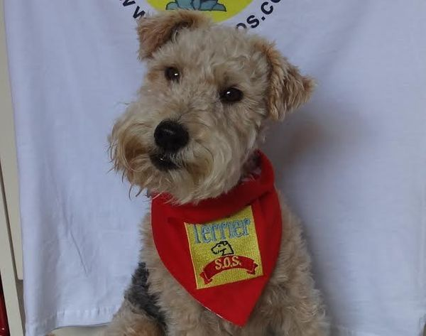 Thanks to this sweet face, many more terriers can now be rescued and find loving homes.