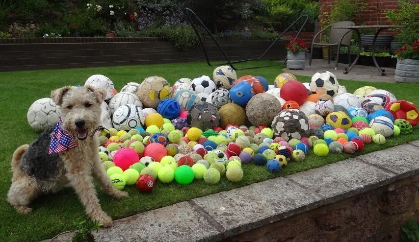 Waffle's owner says she probably has more than 300 of the balls in her garage.