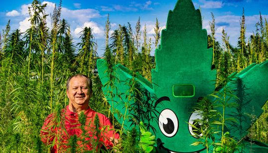 FDP-Landtagskandidat wirbt mit Hanf-Plakat – wir haben ihn auf einen Tropfen Cannabis-Öl