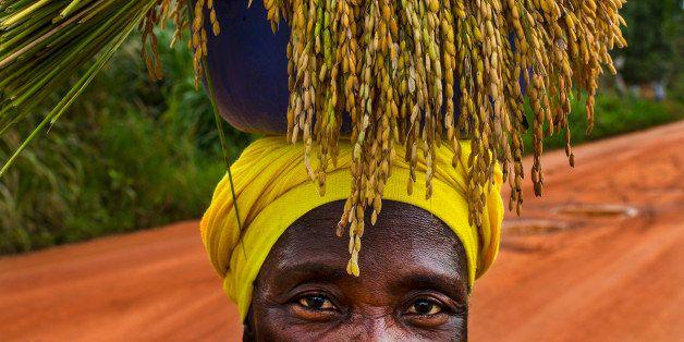 FOYA, LIBERIA-NOVEMBER 6: Sogbondo Raylo, carries a bundle of freshly harvested rice on here head on Friday November 6, 2014